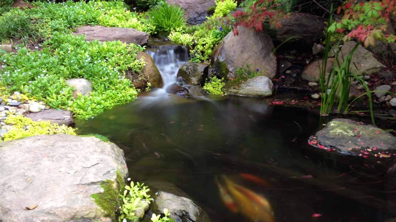 Maryland ponds and waterfalls on pinterest for Garden pond ecosystem