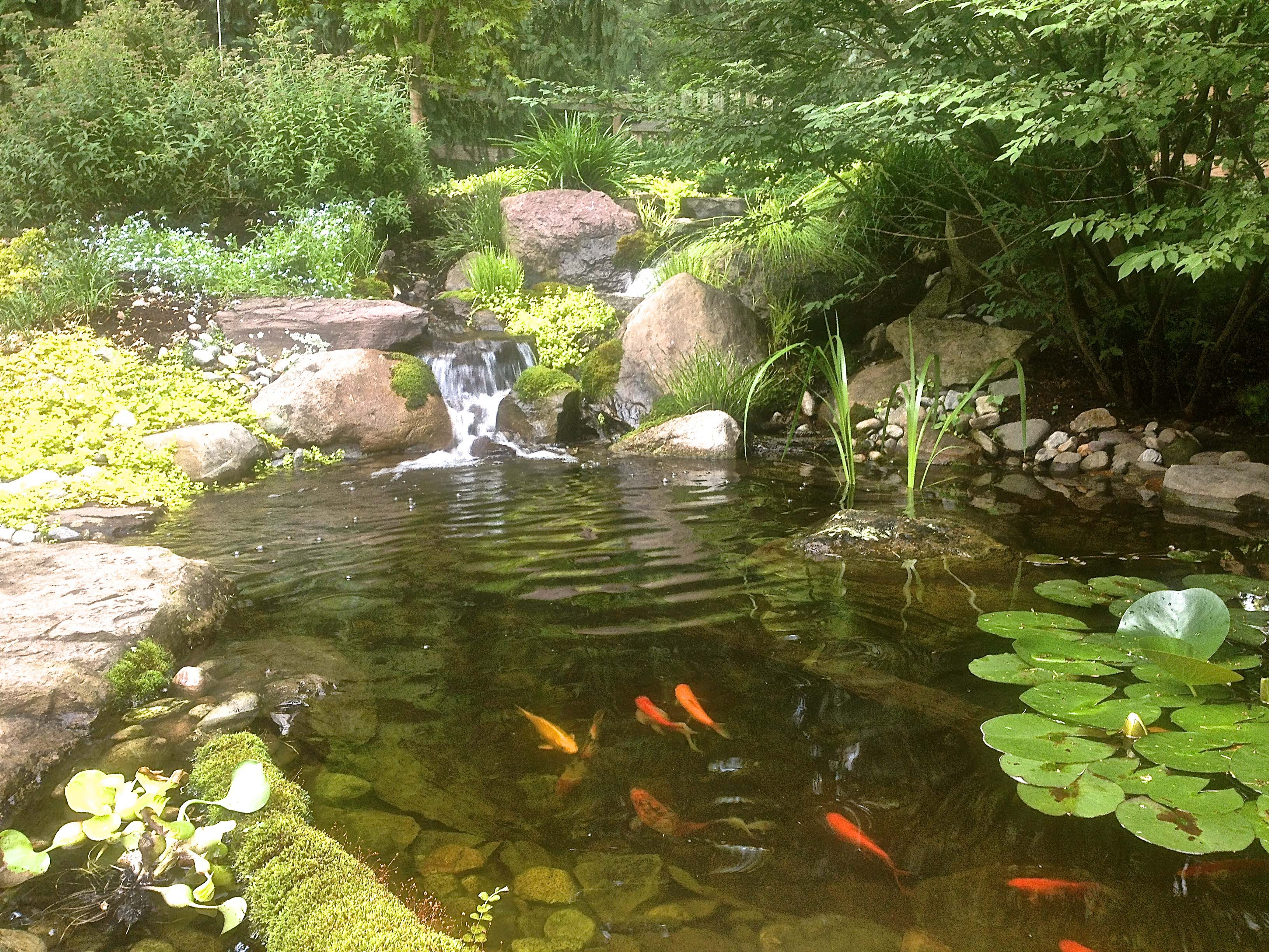 10 pond and waterfall cleaning mistakes baltimore for The backyard pond
