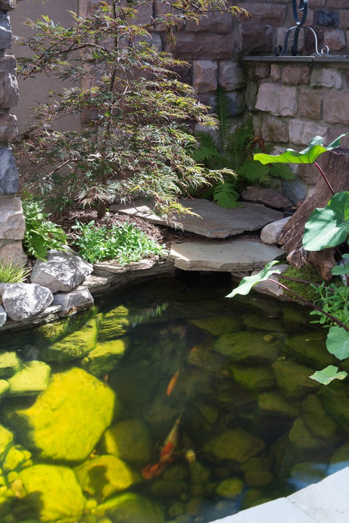 Big ideals small spaces baltimore maryland ponds and for Small pond maintenance