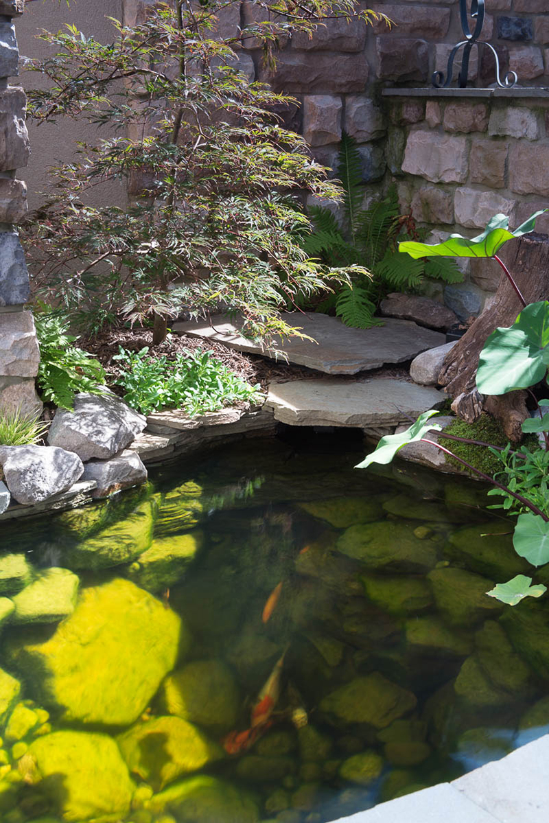 Big ideals small spaces baltimore maryland ponds and for Large pond maintenance