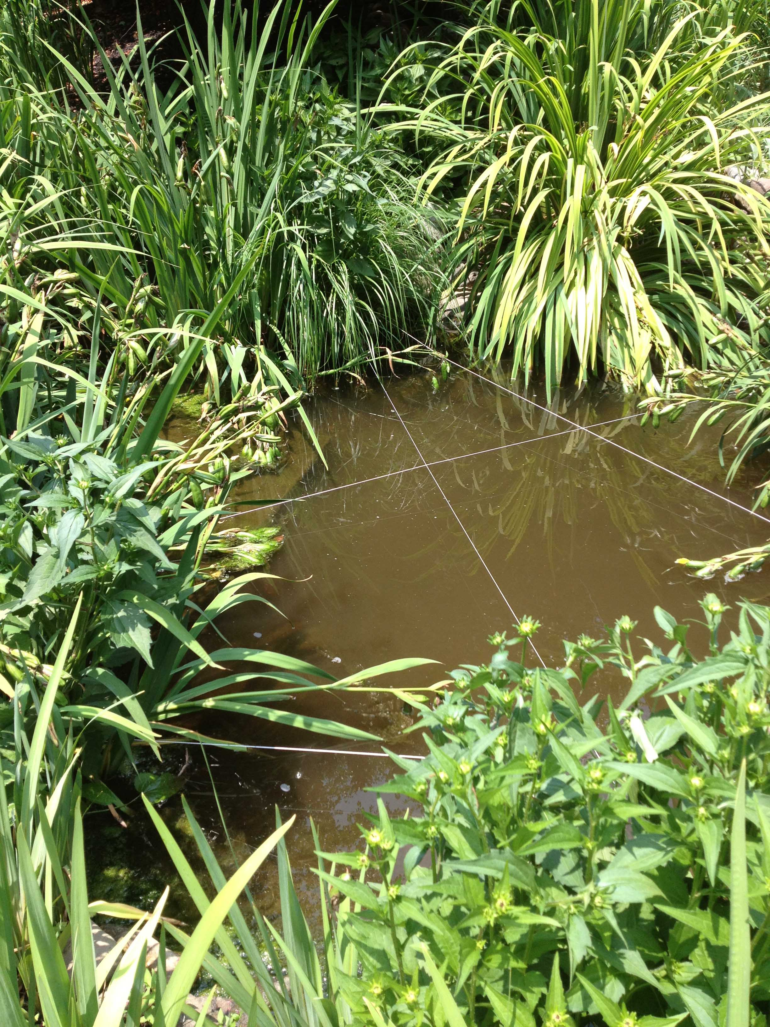 10 most common diy pond building mistakes u2013 baltimore maryland