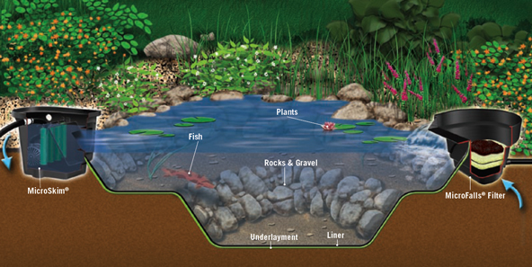 Fish ponds baltimore maryland ponds and waterfalls for Garden pond supplies