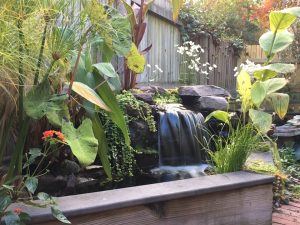 Who Are The Best Pond Companies In Baltimore Maryland Reviews